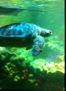 big turtle side tank